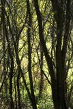осенняя пуща Стоковые Фото