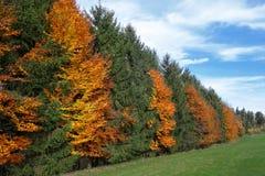Осенняя строка деревьев на крае леса Стоковая Фотография RF