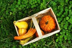 Осенняя тыква Стоковое Фото
