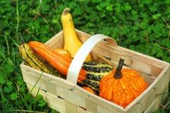 Осенняя тыква Стоковое Изображение RF