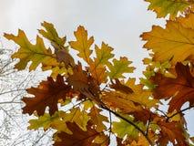 Осенью Стоковое Изображение