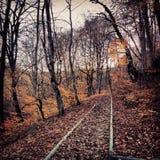 Осень (½ ÑŒ  ÐΜРОÑ) Стоковое Фото