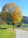 Осень Австрия дерева стоковое фото