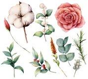 Осень акварели установила с заводами, цветками и ягодами Вручите покрашенный хлопок, поднял, изолированные lagurus, листья и ветв иллюстрация штока