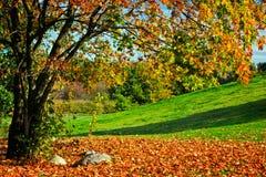 Осень, ландшафт падения цветастый вал листьев Стоковая Фотография RF