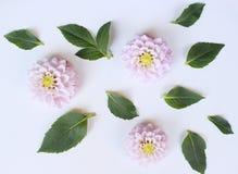 Осень ввела ботаническое расположение в моду Состав георгинов цветет на белой предпосылке таблицы Концепция падения декоративная Стоковое Изображение