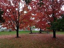 Осень Вермонта Стоковая Фотография