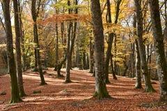 Осень взгляда парка бука Стоковые Фотографии RF
