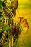 Осень воодушевляет Стоковое Фото