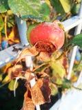 осень высушила цветки, листья и травы стоковая фотография rf
