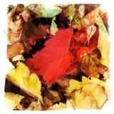 Осень выходит форме мягкий ковер на пол леса Стоковые Изображения RF