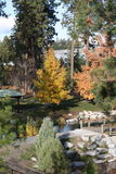Осень в Айдахо Стоковые Фото