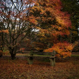 Осень в английском парке Стоковая Фотография RF