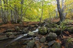 Осень в Болгарии - сентябре стоковое фото rf