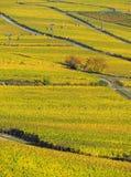 Осень в виноградниках на реке Рейне около desheim ¼ RÃ Стоковое Изображение RF