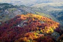 Осень в горах, красный желтый цвет выходит на деревья Стоковое Изображение RF