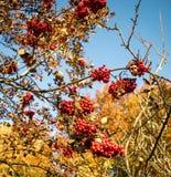 Осень в горах Стоковая Фотография