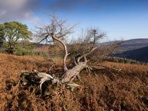 Осень в горах Wicklow, Ирландия Стоковая Фотография