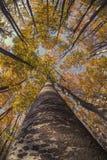 Осень в горе стоковые изображения