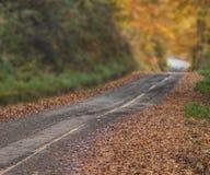 Осень в горе стоковая фотография rf