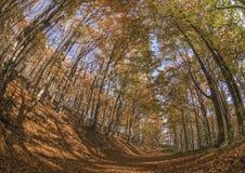 Осень в горе стоковые фотографии rf