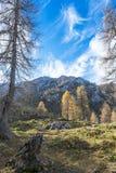 Осень в горных вершинах tha Стоковое фото RF