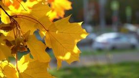 Осень в городе сток-видео