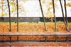 Осень в городе Стоковое фото RF