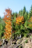 Осень в древесинах в предгорьях гор Jeseniky Стоковое Изображение RF