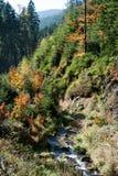 Осень в древесинах в предгорьях гор Jeseniky Стоковое фото RF