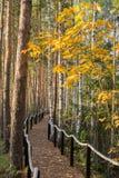 Осень в дендропарке Стоковые Изображения