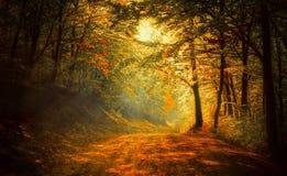 Осень в лесе Стоковые Изображения RF
