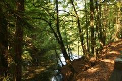 Осень в лесе Pfälzer Стоковая Фотография RF