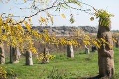 Осень в каменном природном заповеднике усыпальниц Стоковая Фотография RF