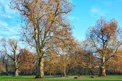 Осень в квадрате стоковое фото