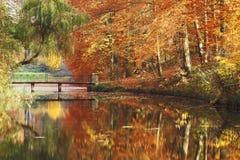 Осень в красивом парке стоковое фото rf