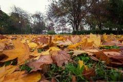 Осень в лесе с желтый падать выходит Стоковые Фото