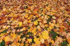 Осень в лесе с желтый падать выходит Стоковое Изображение