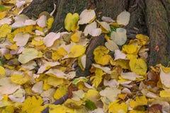 Осень в лесе с желтый падать выходит Стоковые Изображения RF