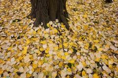 Осень в лесе с желтый падать выходит Стоковая Фотография
