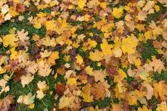 Осень в лесе с желтый падать выходит Стоковые Изображения