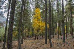 Осень в лесе Стоковые Изображения