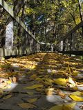 Осень в Мичигане Стоковая Фотография