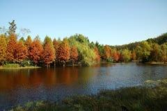 Осень в Нанкине Китае Стоковое Фото