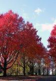 Осень в Новой Англии, Глостере, Массачусетсе Стоковые Изображения