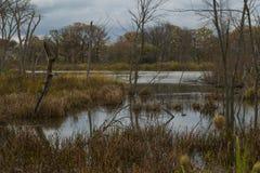 Осень в одичалом Стоковая Фотография RF
