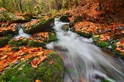 Осень в одичалом Стоковые Фото