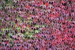 Осень в одном из парка в Люксембурге Стоковое Фото