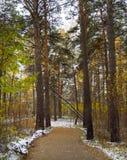 Осень Вдоль пути в лесе Стоковая Фотография