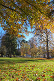 Осень в парке города стоковая фотография rf